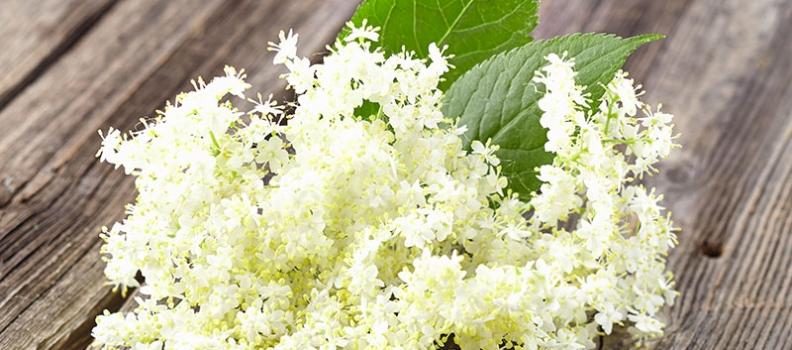 Garden Herbs Celebrate Summer Solstice